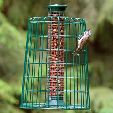 Medium Peanut Feeder with Guardian