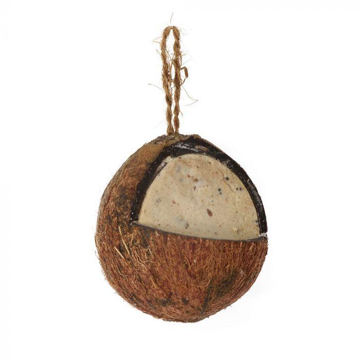Noix de coco fourrée avec insectes et vers - entière