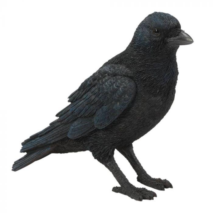 Corbeau (debout)