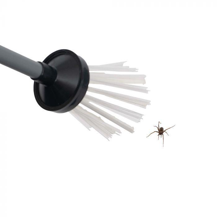 Attrape insectes