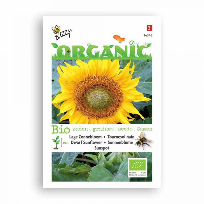 Buzzy® Organic Tournesol nain - Sunspot BIO