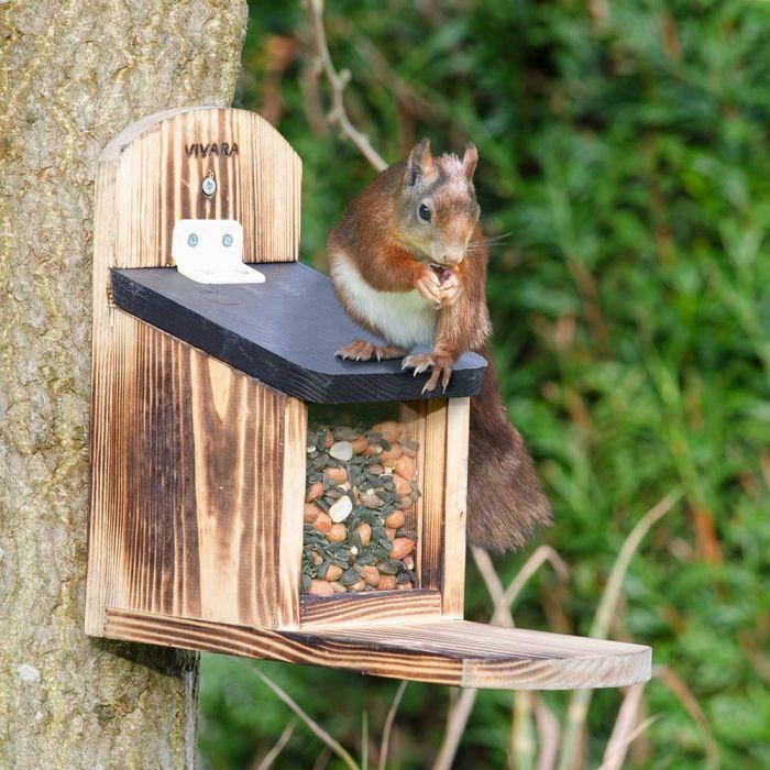 Mangeoire pour écureuils Victoria