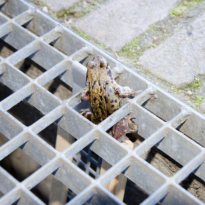 Rampe pour grenouilles