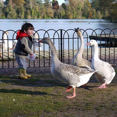 Duck and Swan Sprinkle Food (350g)