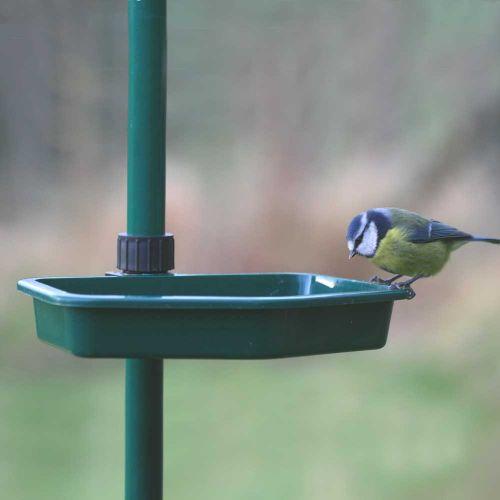 Bird Buffet Water Dish