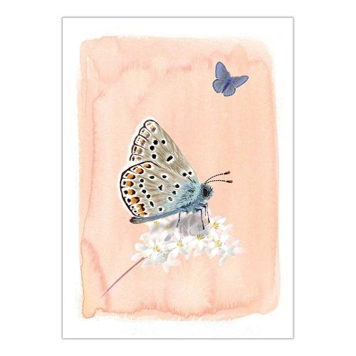 Carte de vœux L' Azuré Common – Myrte