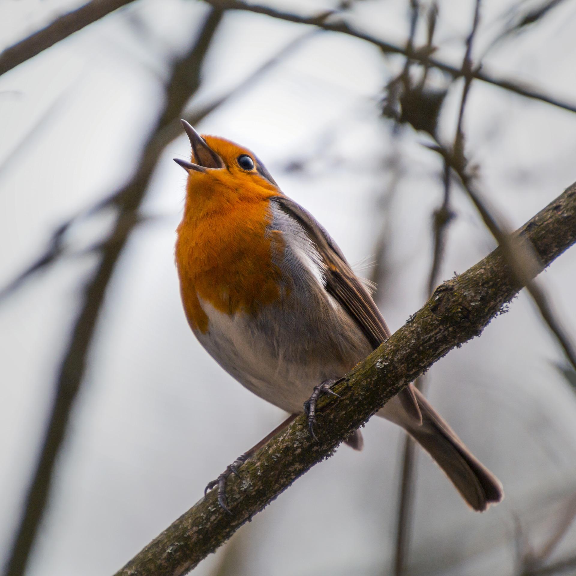 Qui chante au jardin ?