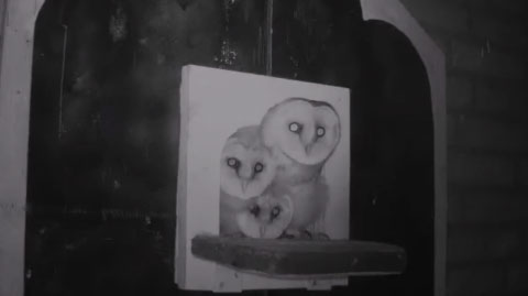 Webcam l'effraie des clochers