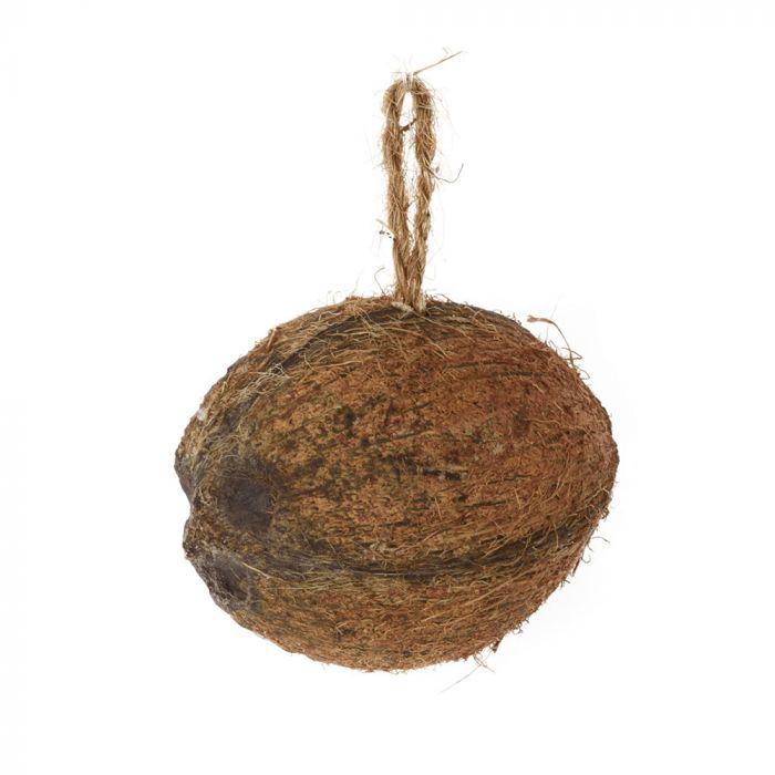 Noix de coco fourrée avec insectes et vers - moitié