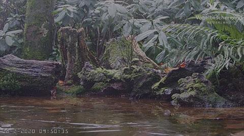Webcam oiseaux du jardin